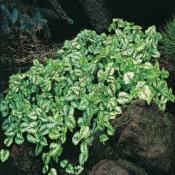 soigner plantes