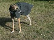 Patrons manteaux chiens lévriers galgos podencos
