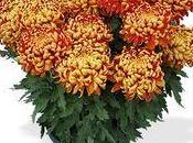 Quelle plante pour Toussaint