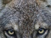 Au-delà l'effondrement, Demain loups Fritz Leiber