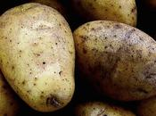 Fortuna, patate bientôt dans assiettes