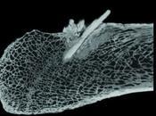 arme pré-Clovis trouvée Etats Unis