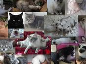 fête chats