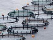 """Alimentation poisson d'élevage est-il plus """"écolo"""" sauvage"""