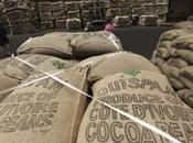 Filière café-cacao Côte d'Ivoire réforme antipodes libéralisme