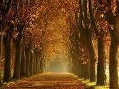 automne noir pour l'assurance