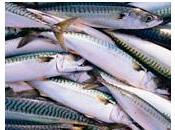 OMEGA poisson donne coeur jeunes femmes Hypertension