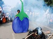 """Monsanto poursuivi pour """"biopiraterie"""" l'Inde"""