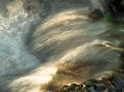 Biodiversité première norme conduite projets génie écologique appliqués zones humides cours d'eau