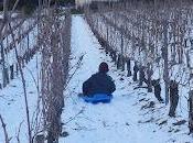 luge dans vignes Mirebeau