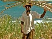 veut multiplier production canne sucre Brésil