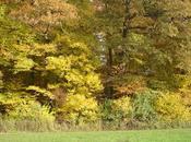 arbres herbes