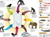 Infographie Animaux humains