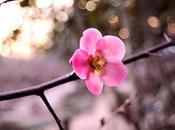 Vive printemps [Défi lundi]