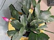 Dans vie, Cactus Pâques