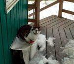 Quels animaux croisez vous sous porche votre maison