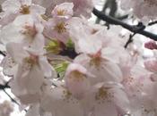 """nature toujours """"saison"""", c'est beau...."""