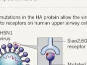 SUPERVIRUS H5N1: revue scientifique Nature publie première étude