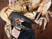 Claude, crabe géant!
