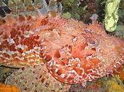 L'observation faune flore formation plongée avec www.aquadomia.com