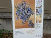 """Nature morte:les iris"" Vincent Gogh(photo prise Saint-Rémy Provence)"