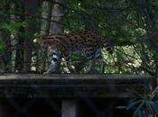 zoos français protègent-ils assez animaux