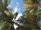 Paradise Lost vacances
