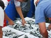 Pêche durable changement c'est pour maintenant