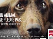 été, dites STOP l'abandon animaux compagnie videos photos