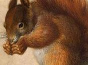 Test bavarois préparatoire l'Oktoberfest: queue l'écureuil