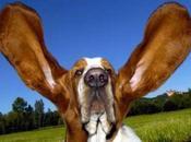 coton tige pour nettoyage l'oreille chien chat
