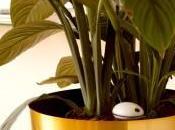 WiFi Plant Sensor surveille plantes distance