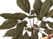 botanique rescousse festivalier