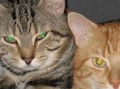 rêvée chats