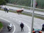 vache folle liberté l'A20