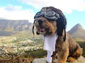 Oscar chien fait tour monde