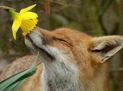 nez, fleur tête queue...