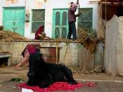 Pushkar, foire chameaux