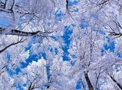 Etre dans neige avec Jean Claude Ameisen