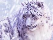 Snow Leopard votre iPhone 5...