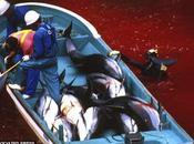 premiers massacres dauphins