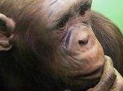 animaux, émotifs menteurs
