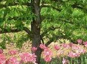 valeurs sûres jardin Saint-Jean-de-Beauregard (91)