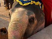 éléphant peint autoportrait (Vidéo)