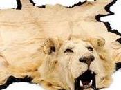 Cameroun chasseur français guide lors d'une chasse lion