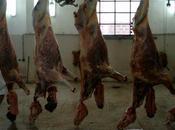 Lassalle rattrapé cheval galop, plutôt viande