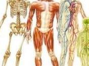 corps humain, fantastique machine