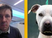 [WAF] Vous, version chien.