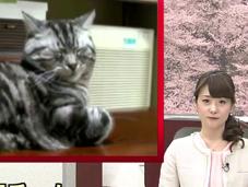 chats reconnaissent réagissent voix leur propriétaire