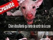 STOP torture animale